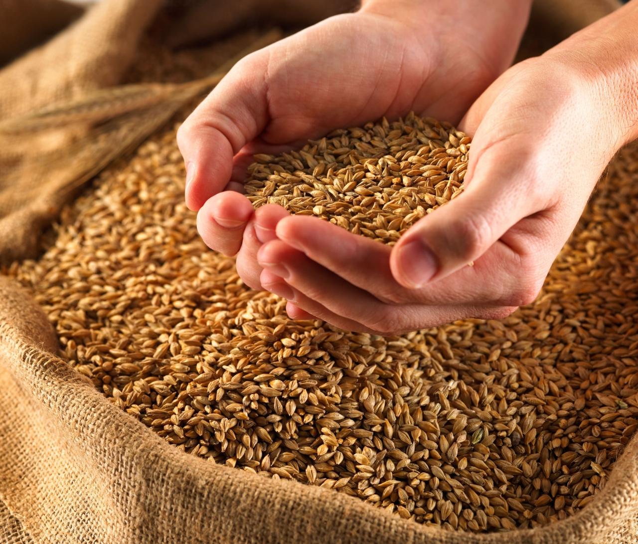 В стране подведены итоги по сборке урожая зерна