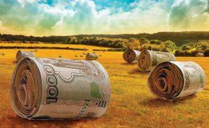 Как получить грант на развитие сельского хозяйства?
