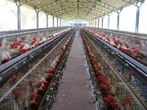 Строительство птицефермы из ЛМК